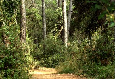 bosc de Bonvilar