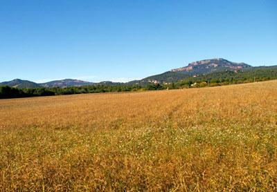 camps de secà